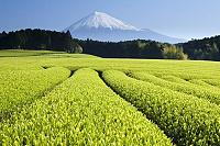 Cajovníky pod horou Fuji Tee.sk