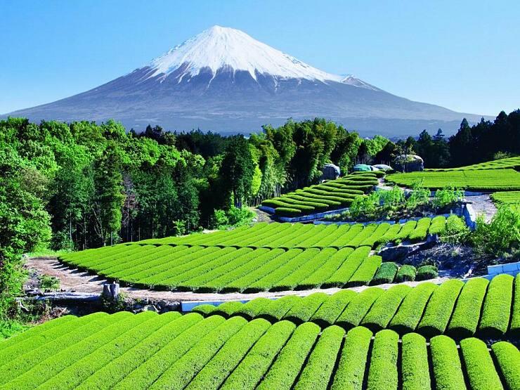 Hora Fuji TEE.SK