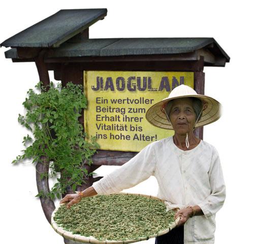 Jiaogulan TEE.SK