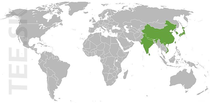 Mapa produkcie zelenych cajov TEE.SK